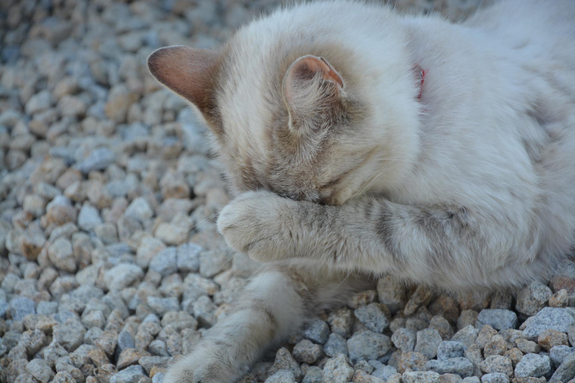 Кошка не ходит в лоток   Описания и фото животных   Некоммерческий ...