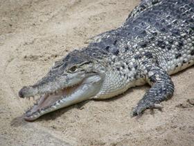 Фото Самые опасные животные для человека